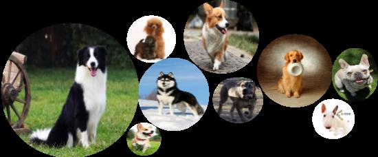 海峡两岸宠物产业博览会将在厦门举办