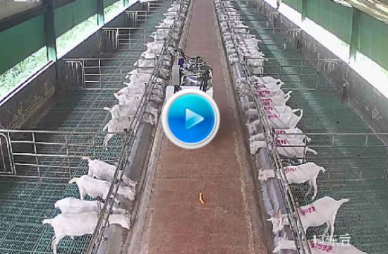 """先进农场APP如何撬动传统农业""""互联网+养羊"""""""