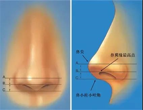 塑造自然鼻部形态——天津伊美尔